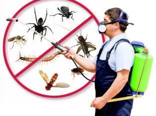 الاكتشاف لمكافحة جميع أنواع الحشرات